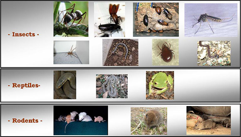 Rodents Amp Insects Global Encasement Inc